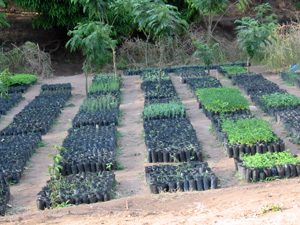 JITUME-Tree-Nursery--3